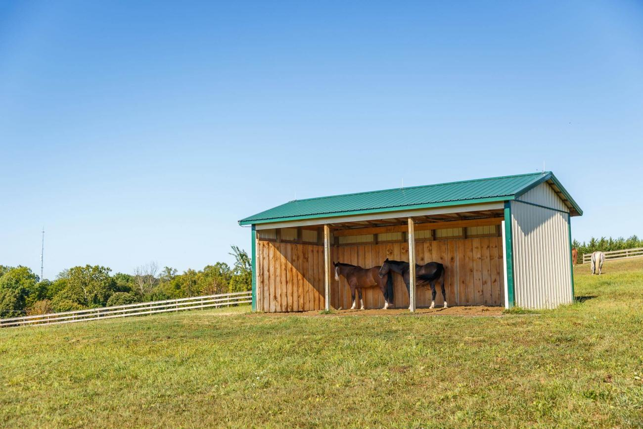 Massachusetts Horse Barn Builder | Dream Buildings
